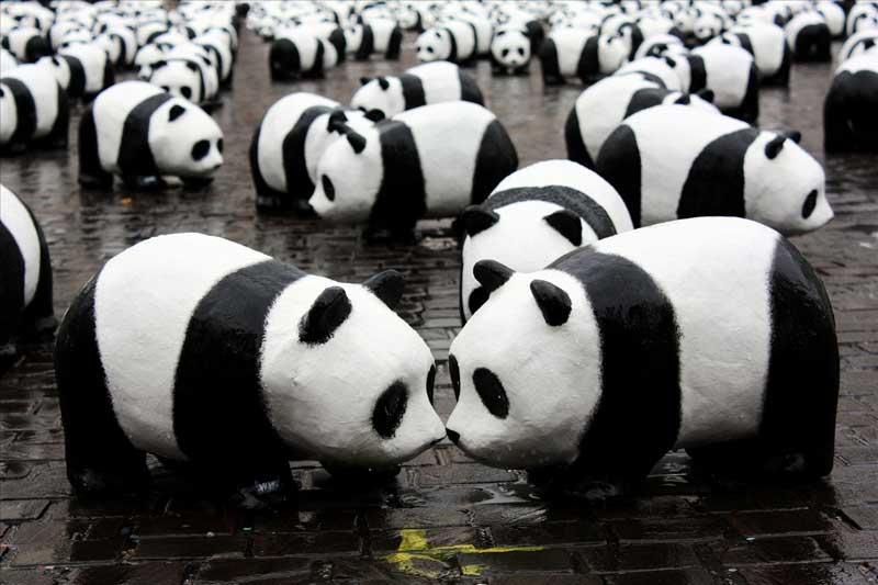 Google Fight the Google Panda Judgement & Win